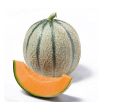 import export green Charentais melon